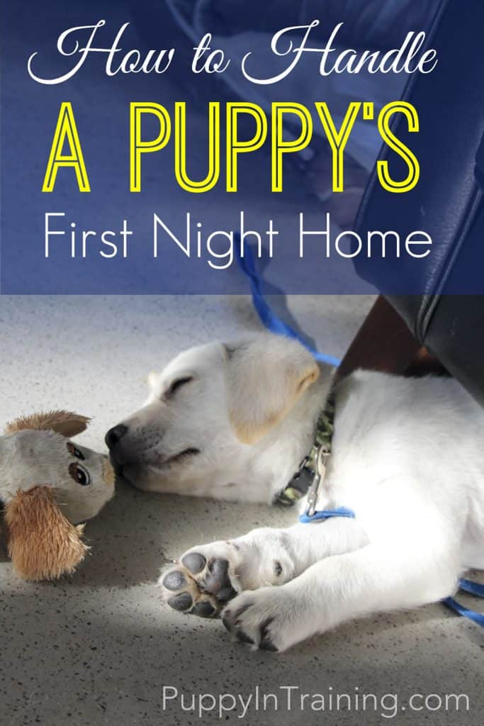 How To Handle A Puppy's First Night Home