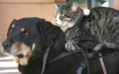 Dog Cat and Mouse 1