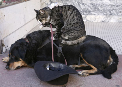 Dog Cat and Mouse 2
