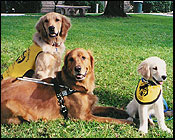 Guide Dogs of America Puppies in Training