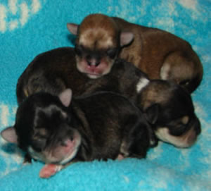 Giggles newborn puppies