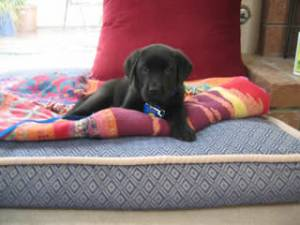 Stetson on his bed at home