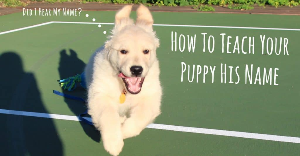 Teaching your puppy his name
