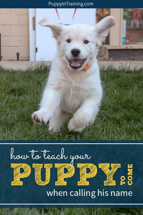 "How do you teach your puppy to come when calling his name. Many years ago when we were raising Stetson to be a Guide Dog we learned some simple tricks to easily teach our puppy his name. One of our favorite games to play with our puppy is the ""name game"" which will quickly teach your pup his name. #puppysname #puppyname #puppynamegame #puppycome #teachpuppyname"