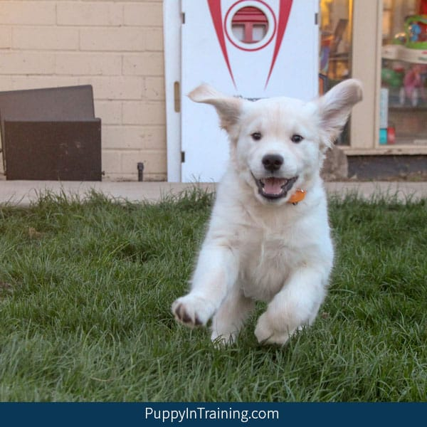 How to teach your puppy his name
