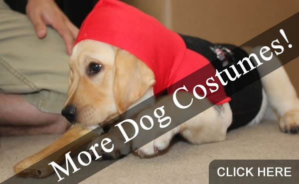 More Dog Halloween Costumes