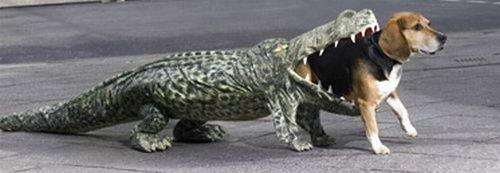Dog Eaten By A Gator