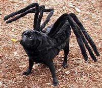 Spider Pug & The 6 Best Dog Costumes On The Internet