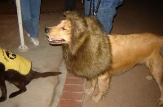 The Golden Lion