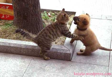 Kitty vs Puppy 3