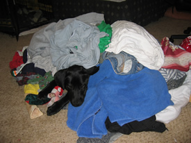 Linus in a pile of laundry