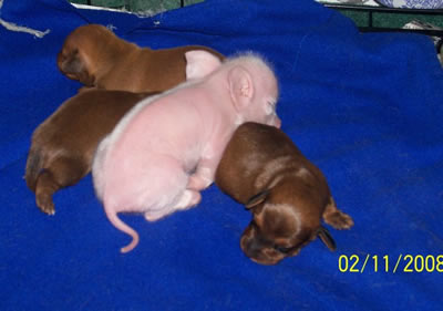 Pink the Piglet sleeping with siblings