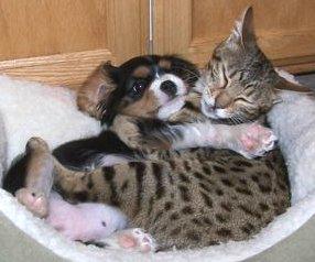 Kitty Vs. Puppy 2