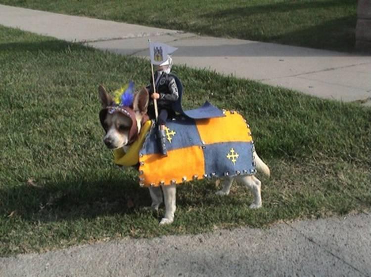 Mini Knight And His Loyal Steed