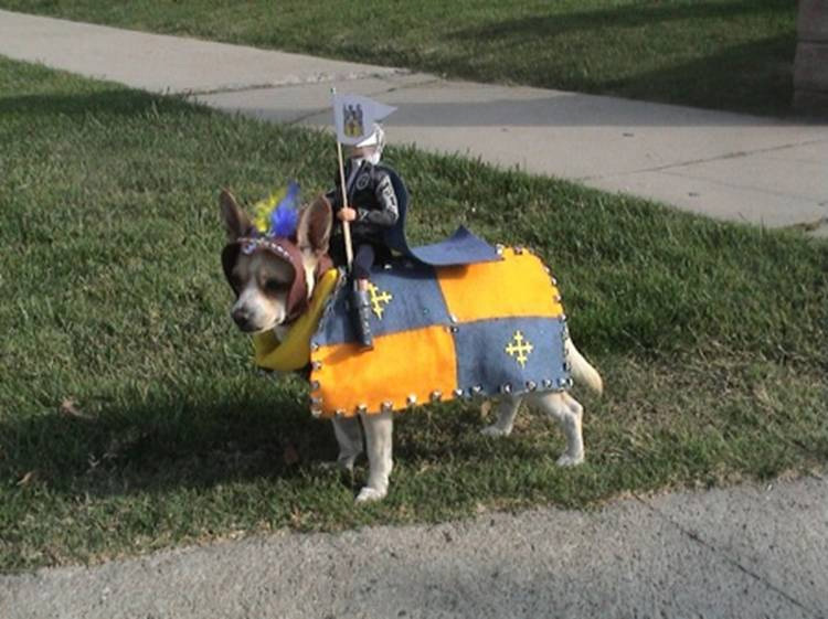 Mini Knight And His Loyal Steed