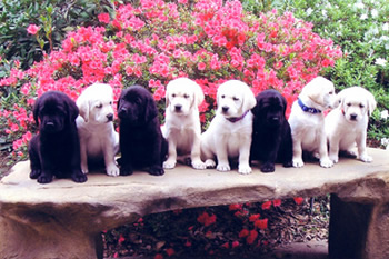 Puppies On Stone Bench From CCI