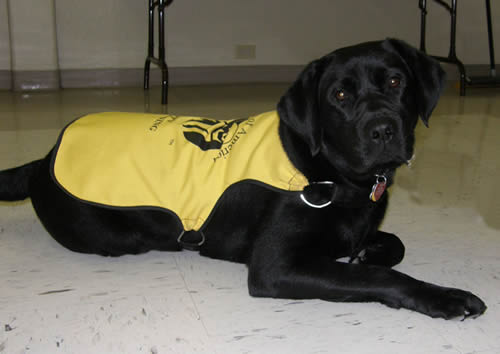 Trooper Guide Dog of America Puppy in Training
