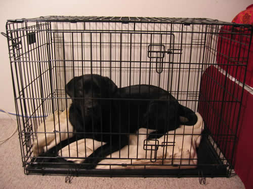 Stetson in His Crate