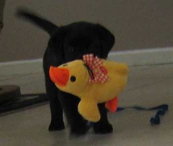 Stetson with Ducky