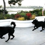 Me Chasing my Dogs