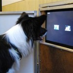 dog-watching-tv