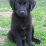 Puppy Linus 2