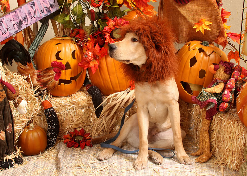 How to make your own dog costume puppy in training farm solutioingenieria Gallery