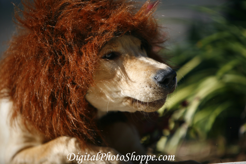 How to make your own dog costume puppy in training dont solutioingenieria Gallery