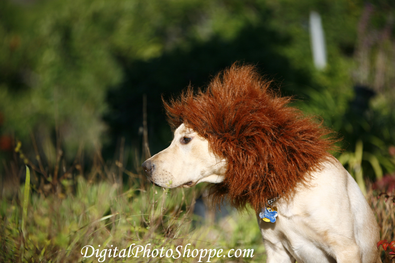 How to make your own dog costume puppy in training im solutioingenieria Gallery