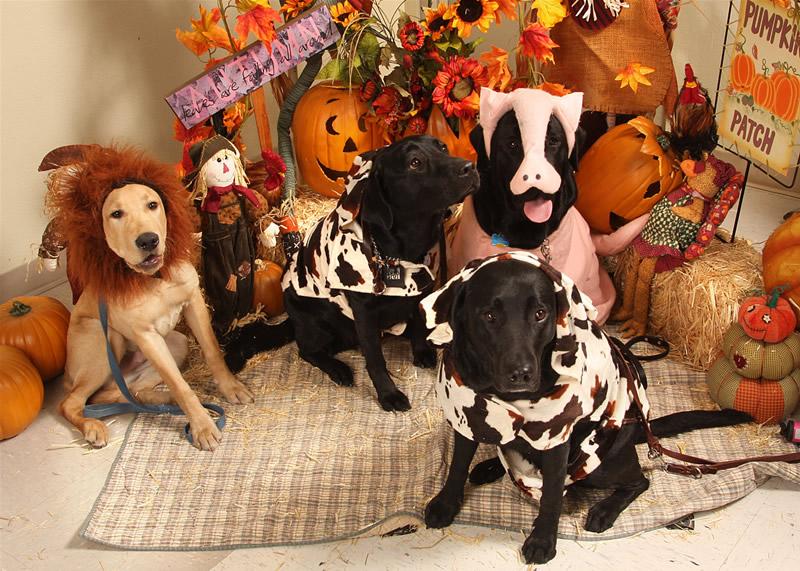 Hot Dog Halloween Parade Long Beach