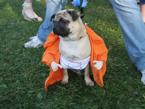 ... back to Livingston Park to see what the vendors and adoption booths had to offer. There were various vendors selling doggie clothing doggie costumes ... & Check Out These Awesome Halloween Dog Costumes! - Puppy In Training