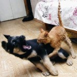 Dog Versus Cat