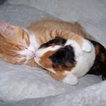 Kitty Loves The Guinea Pig