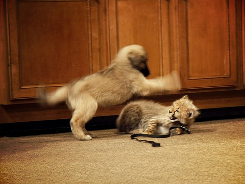 Kitty vs Puppy