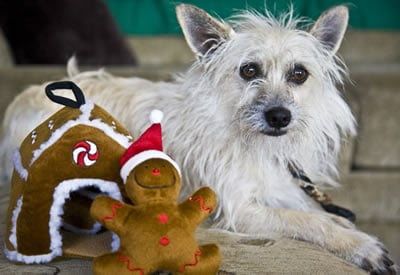 Ralphie and Gingerbread House Dog Toy