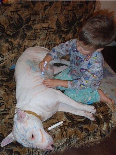 Dog vs Child