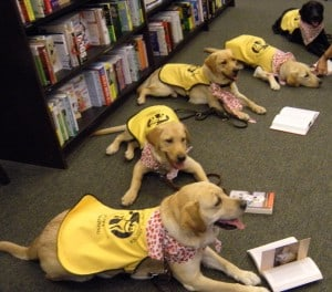 Guide Dogs Reading Marley And Me