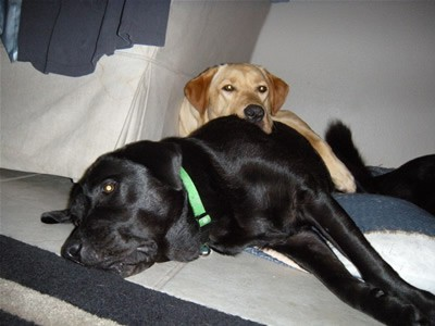 Guide Dog Training Rejects