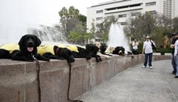 Guide Dog Line Up