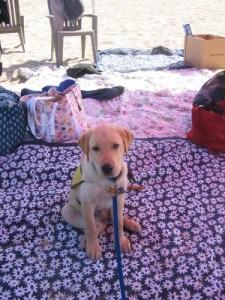 Derby Puppy Career Change