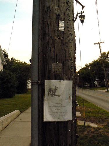 Dog Telephone Pole Ads