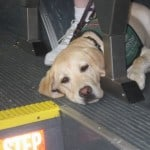 Puppy In Bus