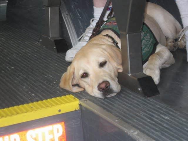 Puppy In Bus