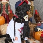 Dog Costume - Stetson the Angel Fan