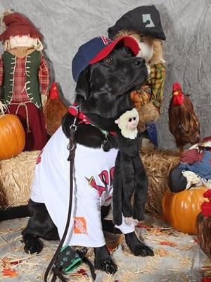 Dog Costume - Stetson the Angel Fan