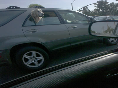 Why Do Dogs Like To Hang Out The Window