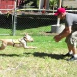 Guide Dog Obedience Training