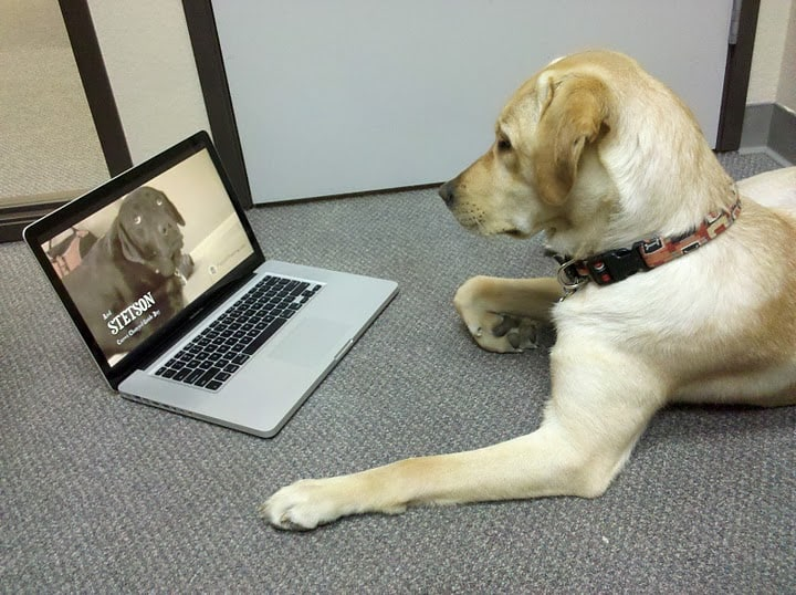 Image result for labrador dog, in the laptop