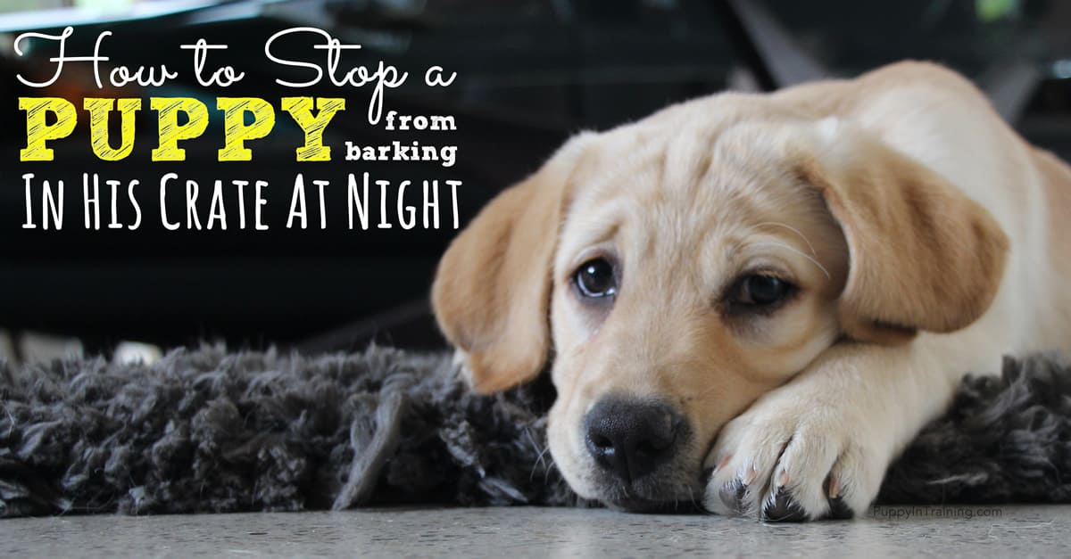 how to stop a puppy from barking in his crate at night puppy in training