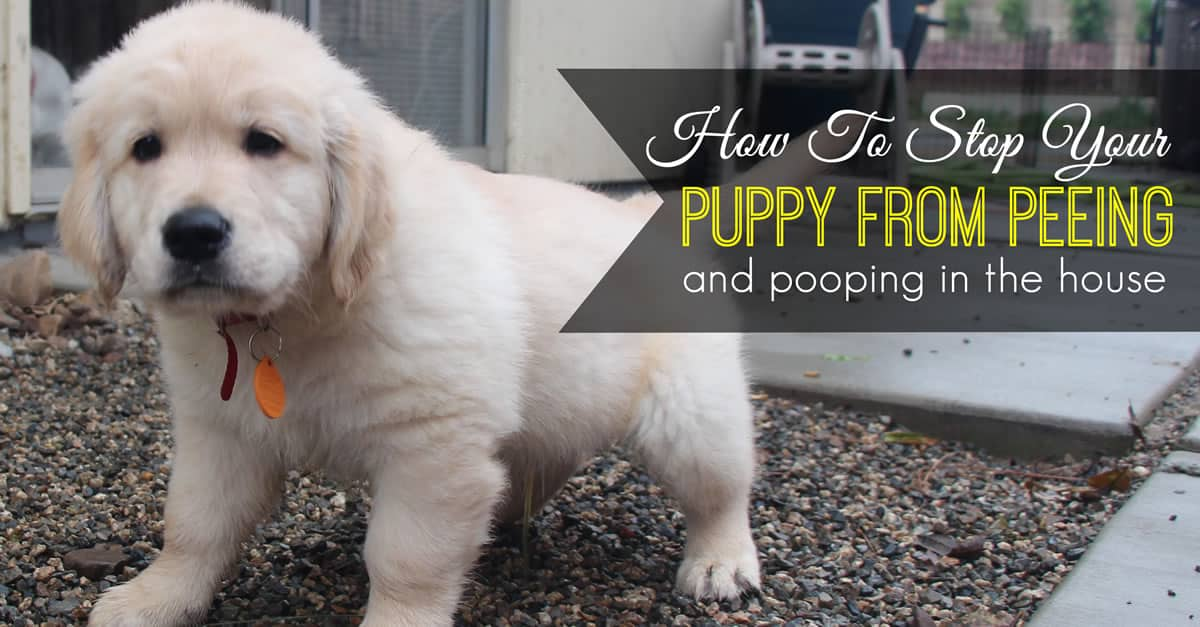 Inside Dogs During The Day Toilet Training